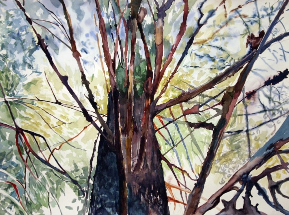 "Worm's Eye Tree, watercolor on paper, 18""x24"", 2005 •"